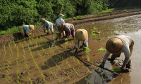 Sustainable Agriculture in Central Java